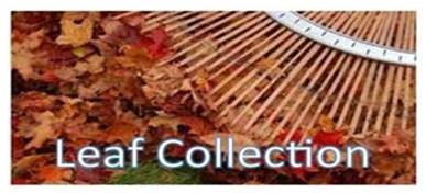 leaf collection image for home page