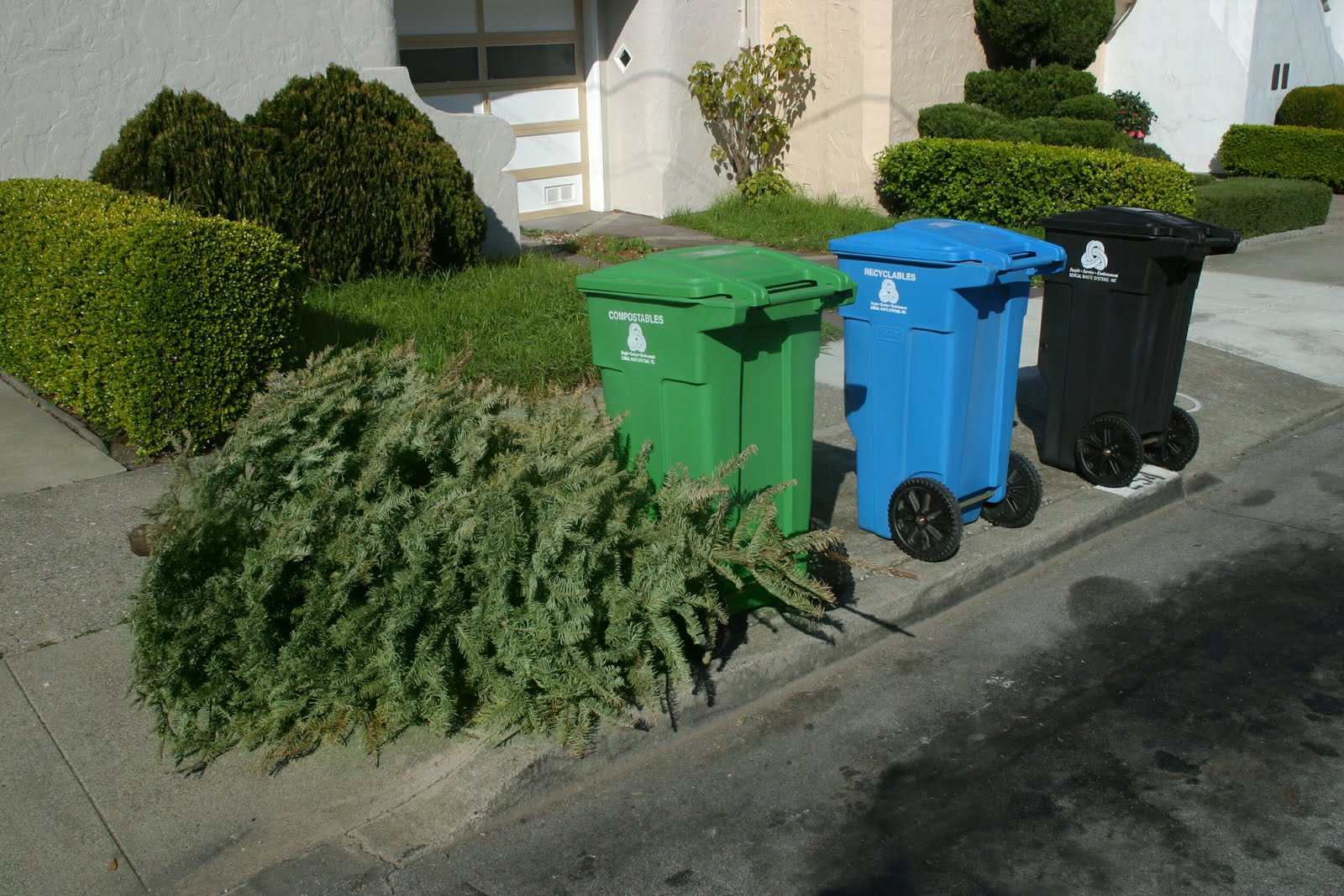 christmas-trees-in-the-curb