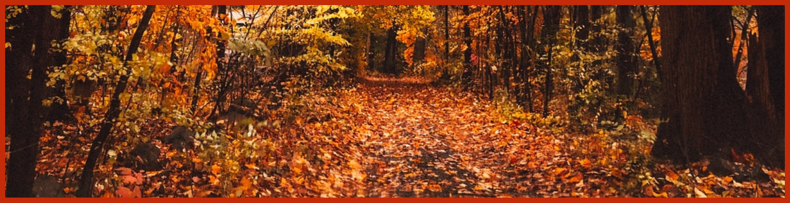 Leaf Collection Website banner